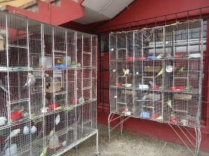 3 june 2015 birds at the bodegona